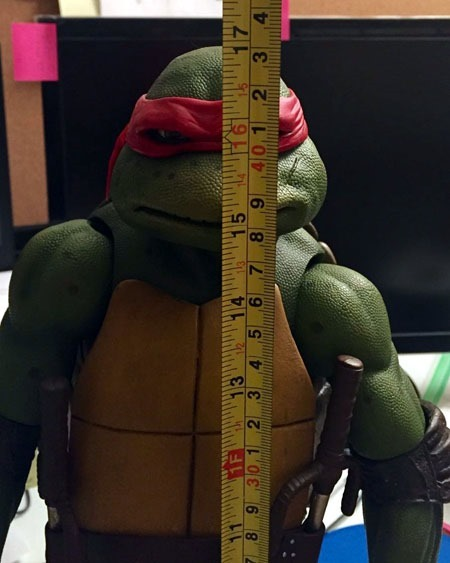 quarter_scale_raph_height