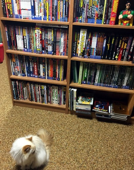 ziggy_looking_at_shelves