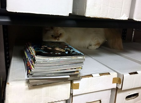 ziggy_pawing_at_comic_boxes_in_rack